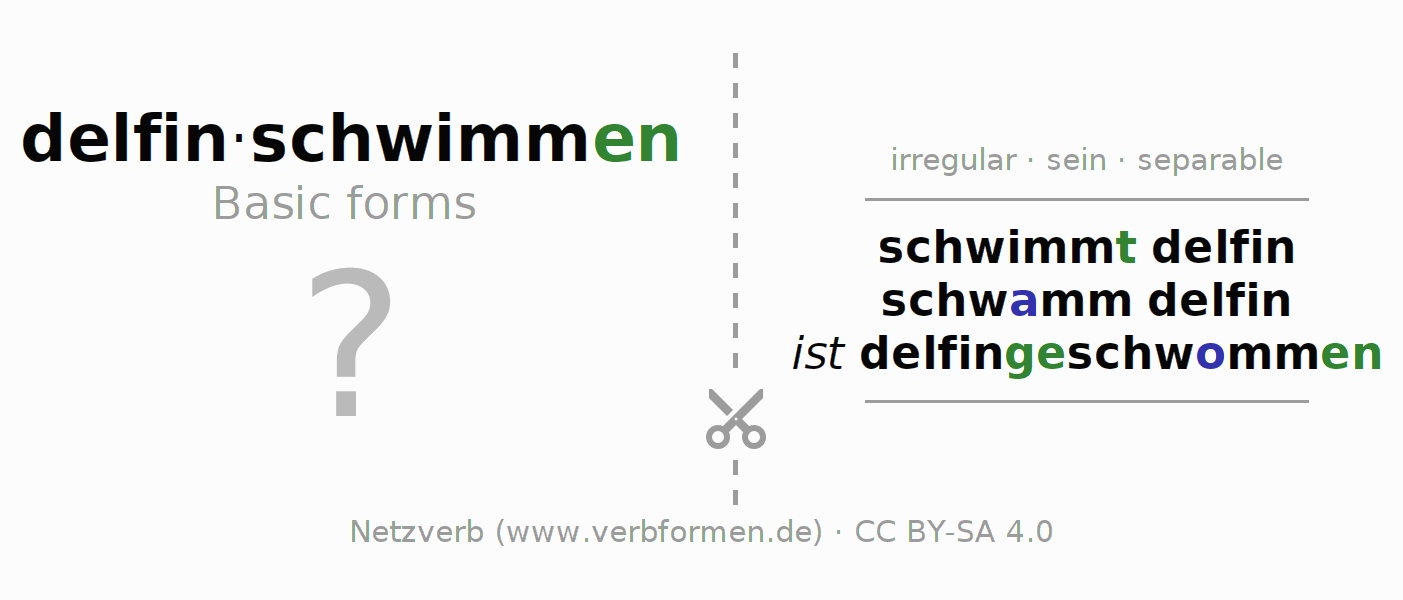 Flash cards for the conjugation of the verb delfinschwimmen (ist)