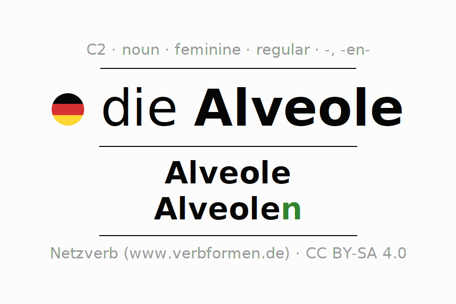 Declension | Alveole | All Forms, Plural, Rules and Downloads