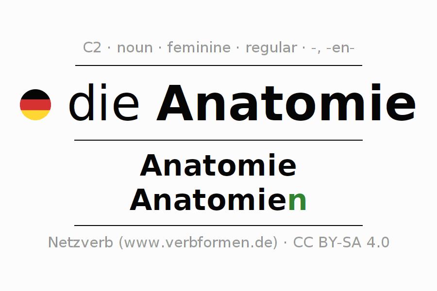 Berühmt Ms In Der Anatomie Fotos - Anatomie und Physiologie des ...
