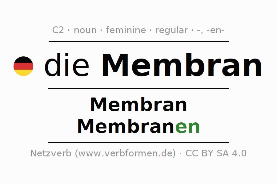 Erfreut Zweck Des Membran Ideen - Menschliche Anatomie Bilder ...
