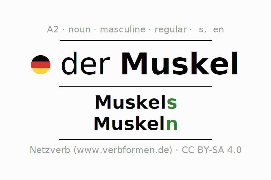 Declension | Muskel | All Forms, Plural, Rules and Downloads